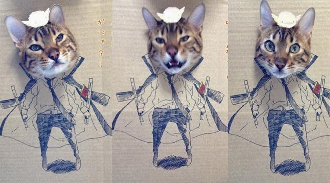 Lucunya Cosplay yang Dilakukan Kucing