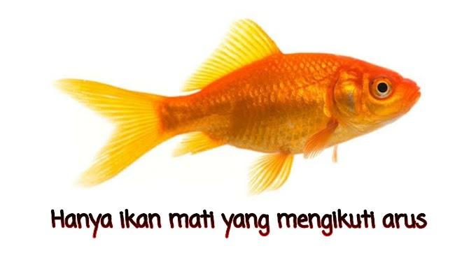 Kata Bijak Quote Tentang Ikan