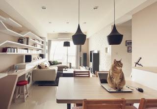 Kelakuan Kucing saat sendirian