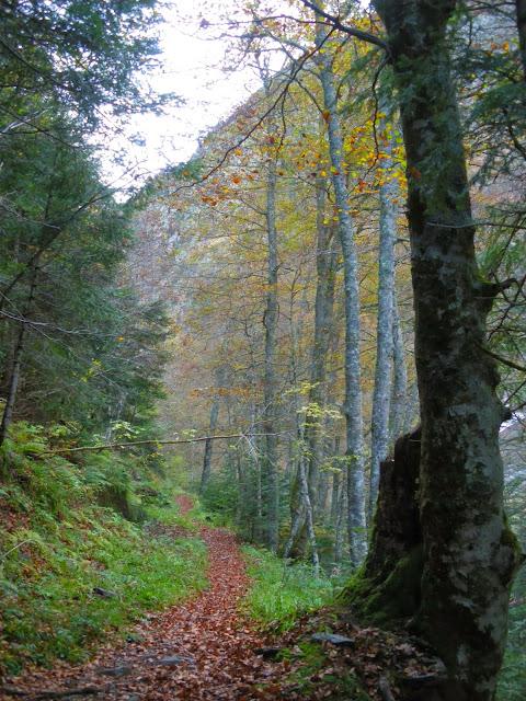 Vall de Toran a la tardor Val d'Aran Pirineu de Lleida