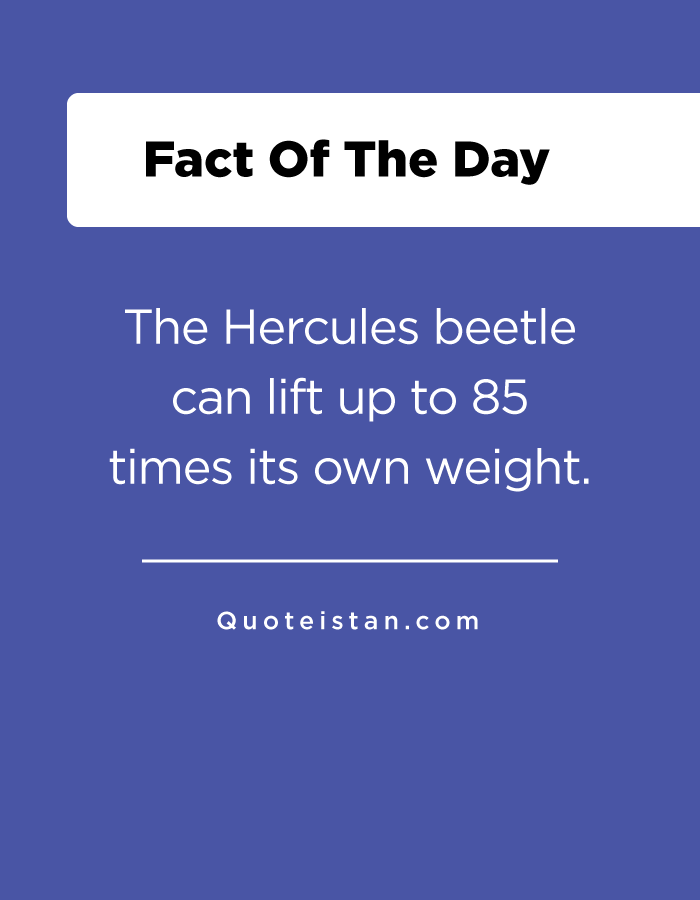 The Hercules beetle can lift up to 85 times its own weight.