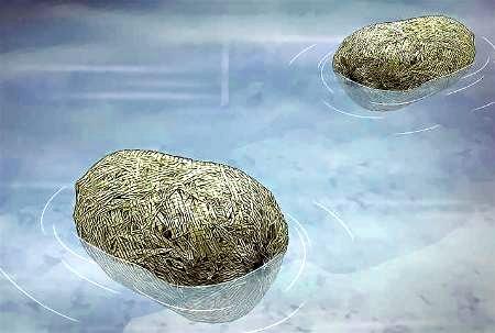 eliminar algas de estanque naturalmente