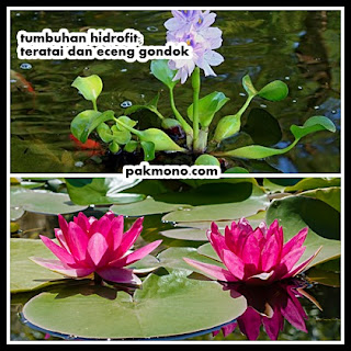 Contoh adaptasi morfologi pada tumbuhan