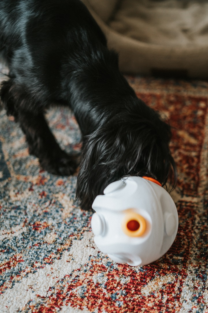 K9 Connectables, Interactive Toys for Dogs