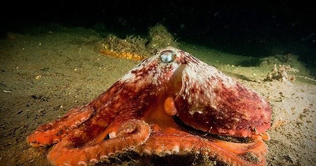 Ciencias de Joseleg: Excreción en moluscos