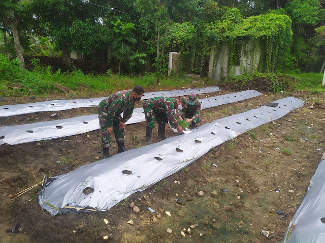 Manfaatkan Lahan Kosong, Babinsa Kodim 1002/Barabai Tanam Lombok