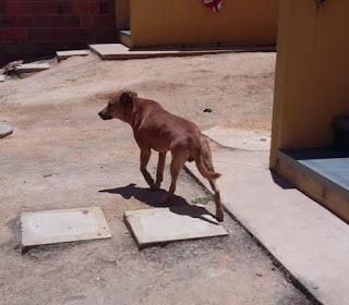 Cachorro ataca criança de 03 anos, em Barra do Choça