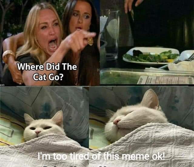 woman yelling at cat meme - Where Did The Cat Go? I'm too tired of this meme ok!