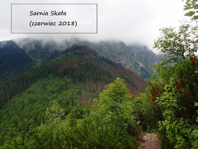 Sarnia Skała 1377 m n.p.m. od Doliny Strążyskiej