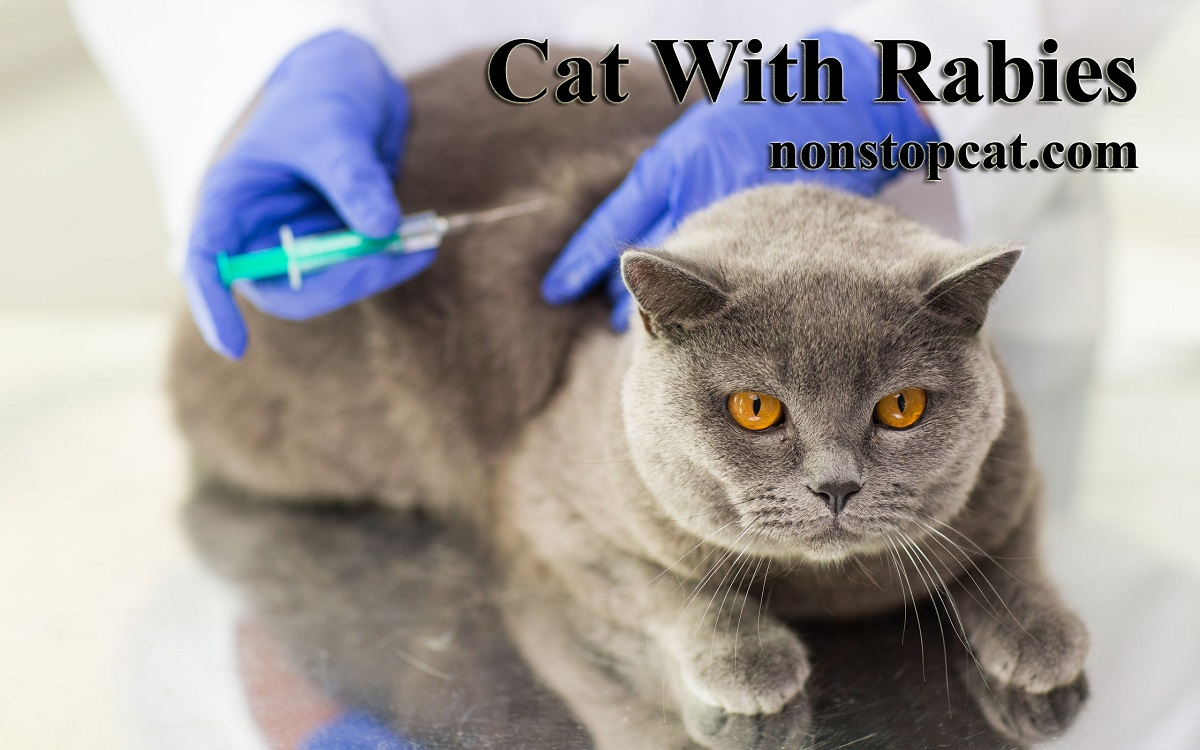 Cat With Rabies