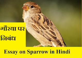 Essay on Sparrow in Hindi