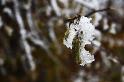 Co uczula w styczniu? 4 najważniejsze alergeny.