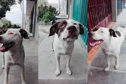 He doesn't have any eyes and his owners still abandoned him in the streets, weeks and he is still there