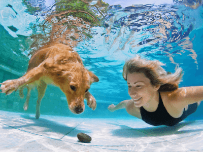 Challenge Your Dog with interactive games