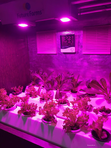 What is Pink Light Verticle Farming
