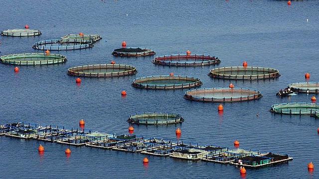 Αργολίδα: Αναμένεται νέα χωροθέτηση Περιοχών Ολοκληρωμένης Ανάπτυξης Υδατοκαλλιέργειας
