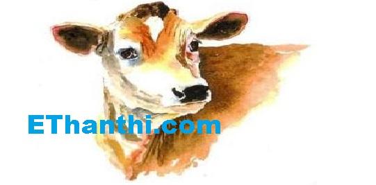 பசு மாடு பற்றிய சில செய்திகள்   Some news about cow !