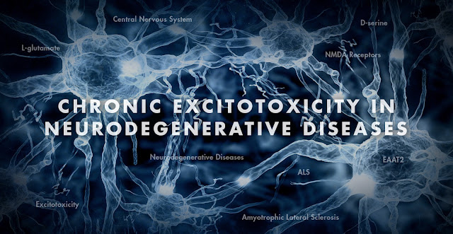 Functional Neurology: Chronic Excitotoxicity in Neurodegenerative Diseases Part 3 | El Paso, TX Chiropractor