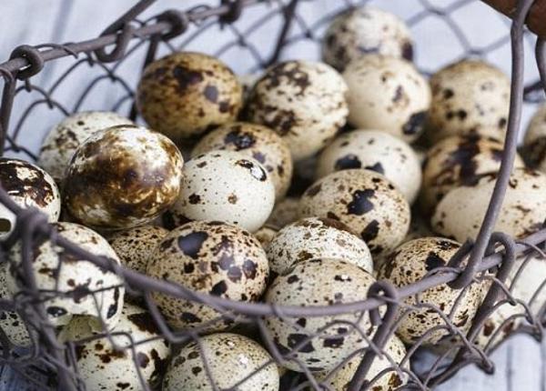 Benefits of quail eggs for men