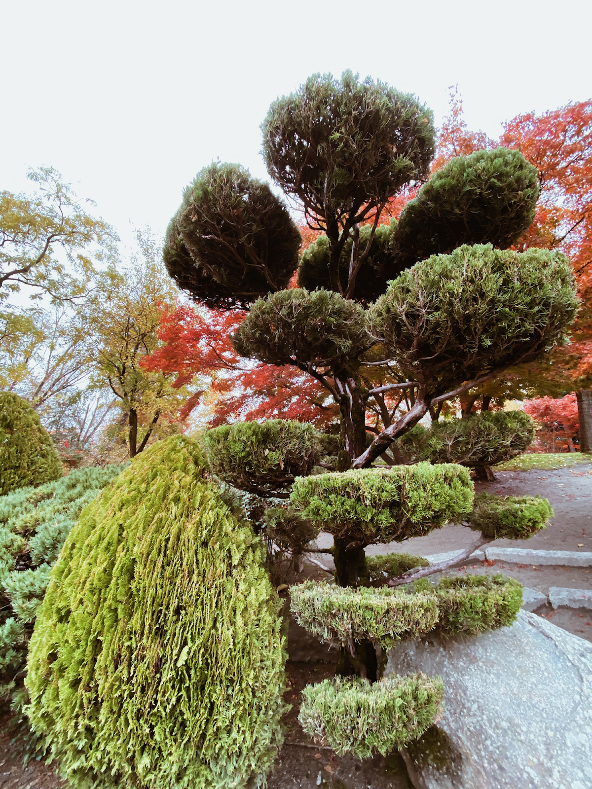 Ogrody Japońskie we Francji