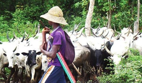 Fulani Herdsman Allegedly R*pes Teenager In Her Parents' Farm