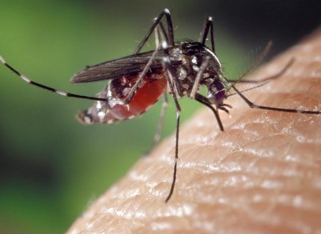 5 Gigitan Serangga dan Cara Mengatasinya