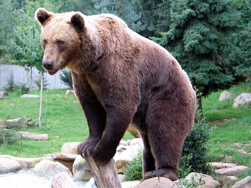 Εθεάθη αρκούδα στην Ξάνθη - Κινητοποίηση των Αρχών