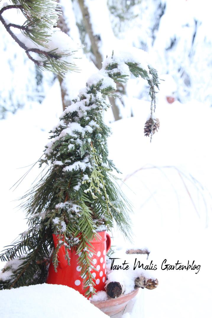 Kleiner Tannenwichtel im Schnee
