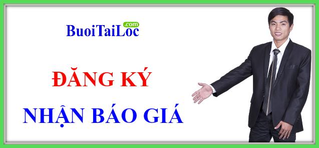 GIA-SI-BUOI-HO-LO-tai-loc-dua-hau-thoi-vang-kinh-doanh-tet-2016