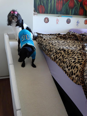 rampas para cães cegos