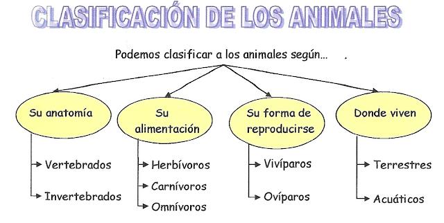 Resultado de imagen de clasificacion de los animales