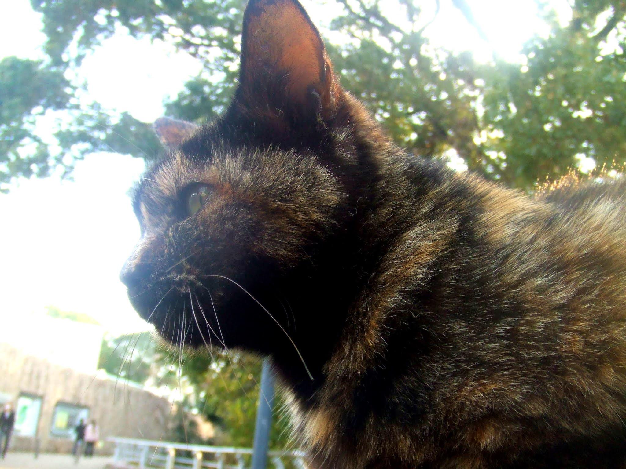 猫さんの横顔の写真です。サビ猫さんの、キリリと引き締まった横顔。猫ブログなどにどうでしょう。
