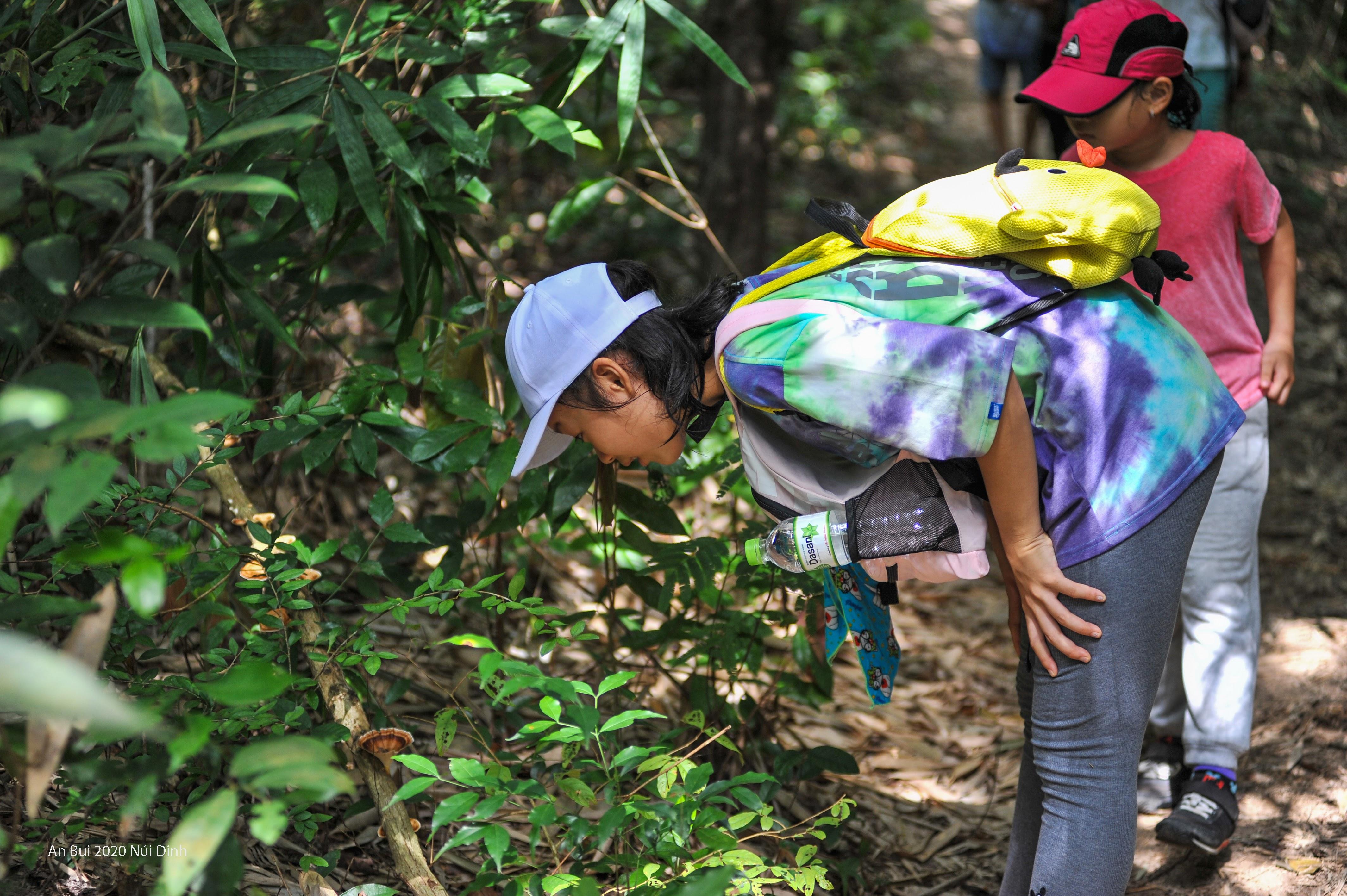 Lạ lẫm với nấm rừng