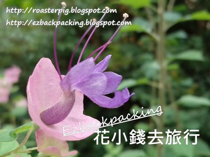 香港動植物公園7月花