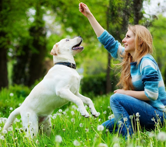 How to Train Your Dog at Home | Mr n Mrs Pet