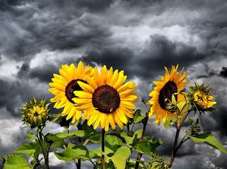 Apa Saja Fungsi dan Bagian Yang Terdapat Dalam Bunga