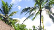 Bali resort Indonesia | Mobile Wallpaper