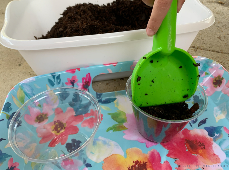 growing sunflowers in pots with kids