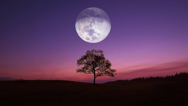 Lonely tree, sunset, iPhone moon and desktop wallpaper.