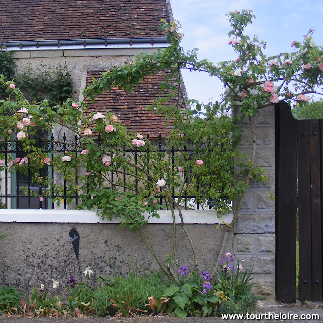 Roses over a gateway in the Loire Valley.  Indre et Loire, France. Photographed by Susan Walter. Tour the Loire Valley with a classic car and a private guide.