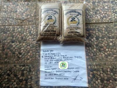 Benih Pesanan TUKIRMAN EDI Purworejo, Jateng. (Sebelum packing)