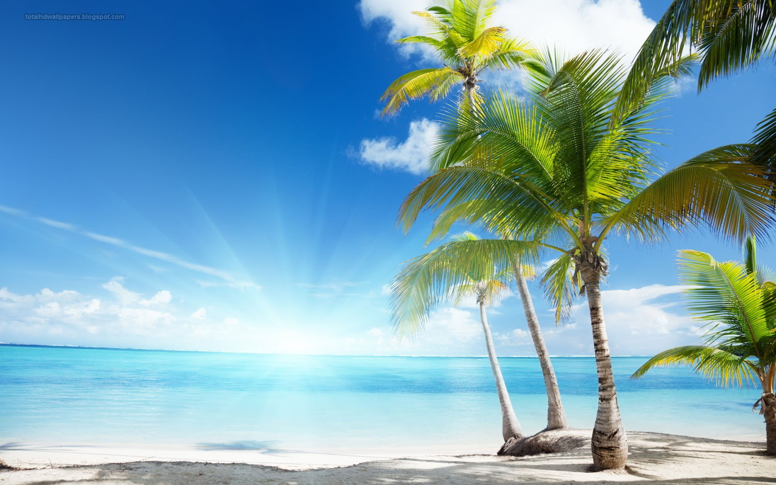 Palm Trees On The Beach: Palm Tree Wallpapers Hd