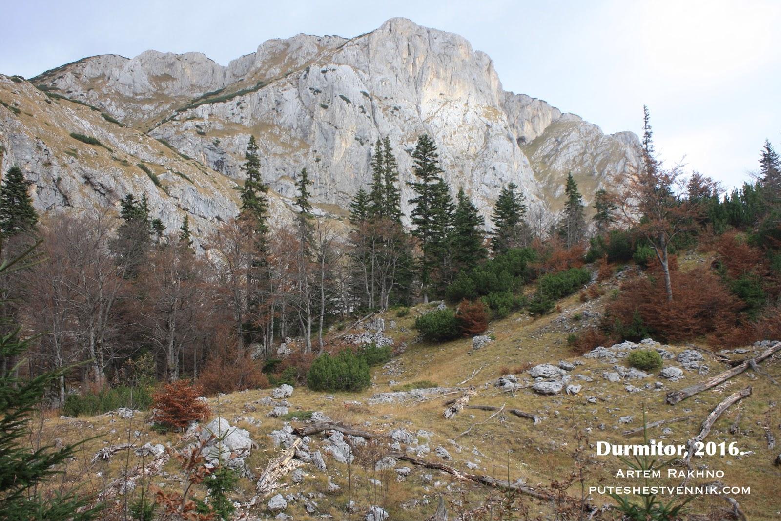 Лес в Черногории