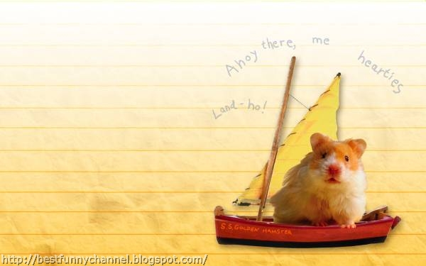Hamster on the boat.