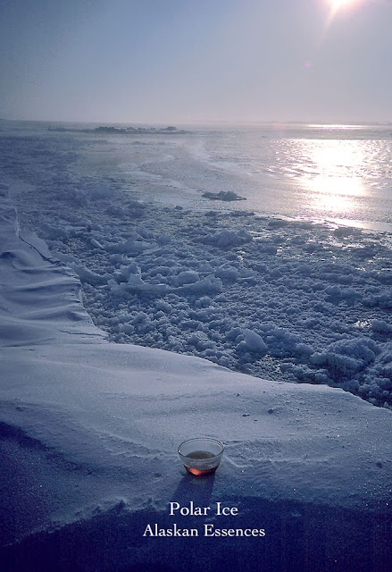 Bloesemtherapie: Polar Ice