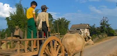 Ox Cart travel in Myanmar