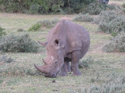 Namibia, rhino poaching, poaching, rhino, rhinoceros