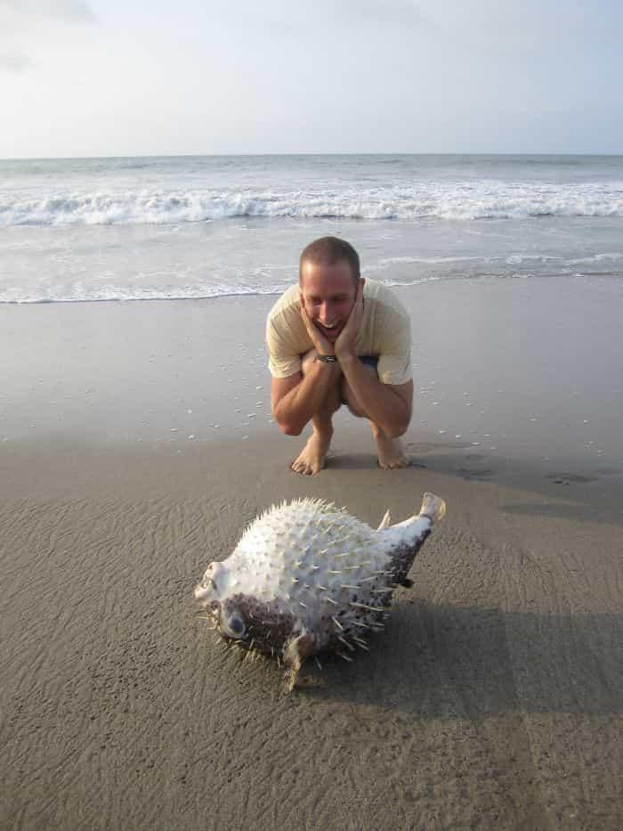 السمكة البالون ,أغرب أشياء وجدت على الشواطئ,أغرب الاشياء