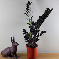 A Zamioculcas Zamifolia Raven plant in an orange pot with a ceramic rabbit sitting next to it.