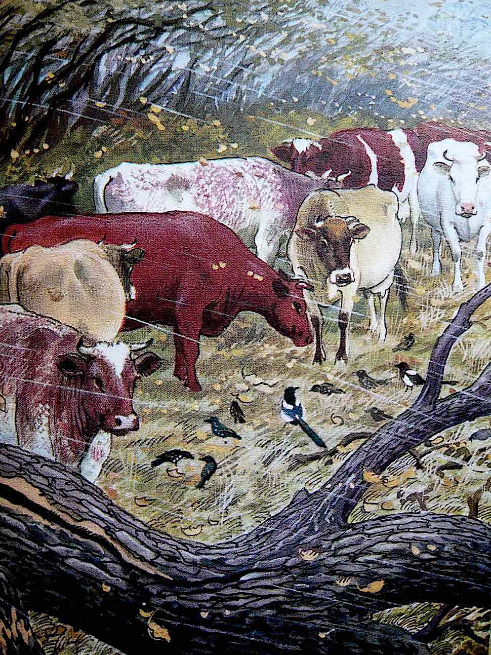 a Charles F. Tunnicliffe illustration of cows in bad weather